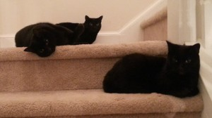 Rotten Cats on Stairs
