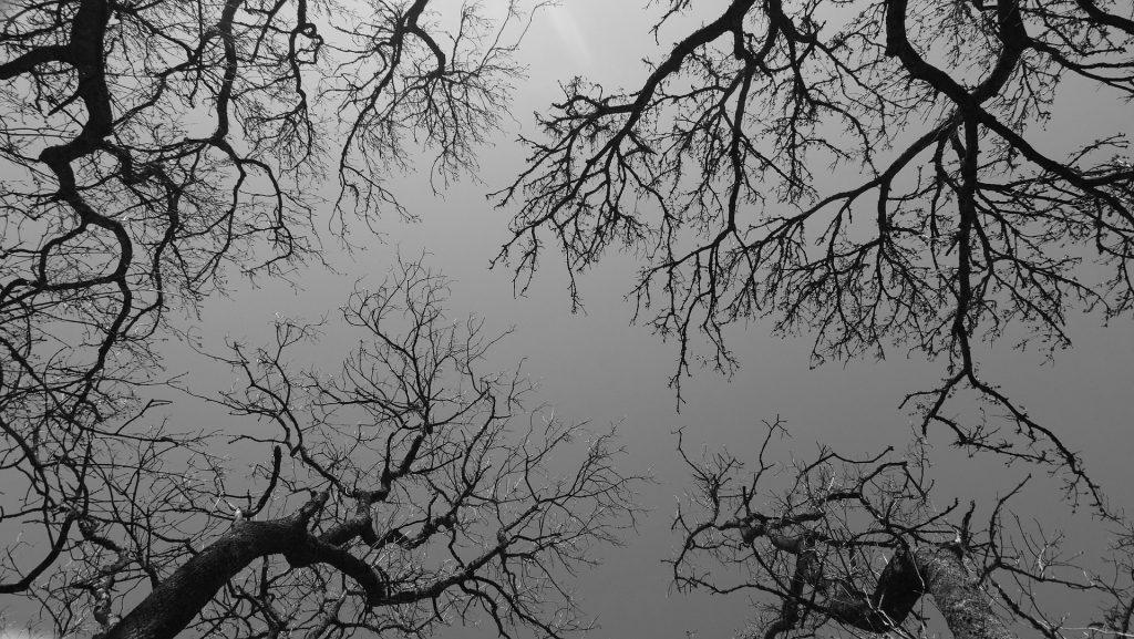 trees-1406760_1920